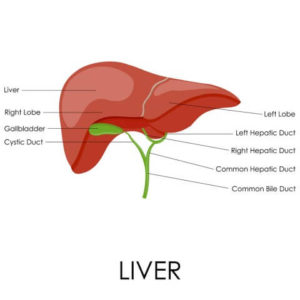 liver disease, hepatitis c